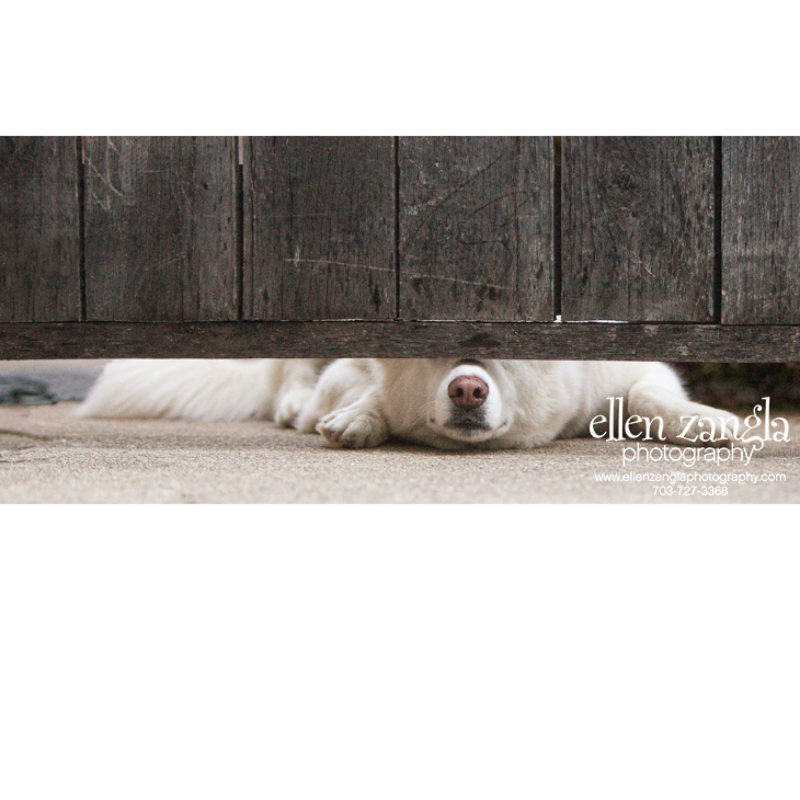Photo of Mixed Breed Dog Looking Under a Gate